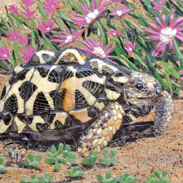 Tent-tortoise-with-pink-flowers-2