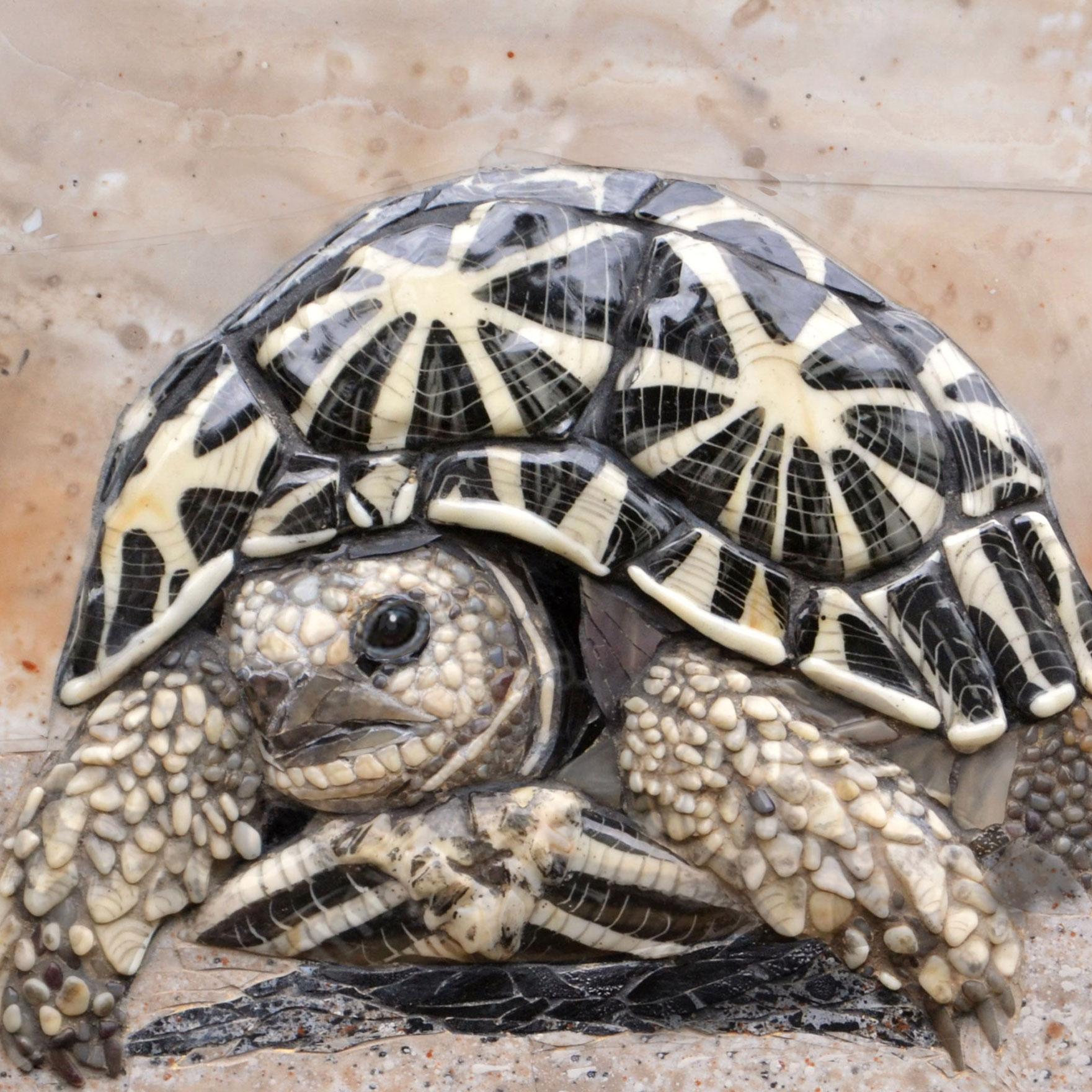 tortoise-in-desert